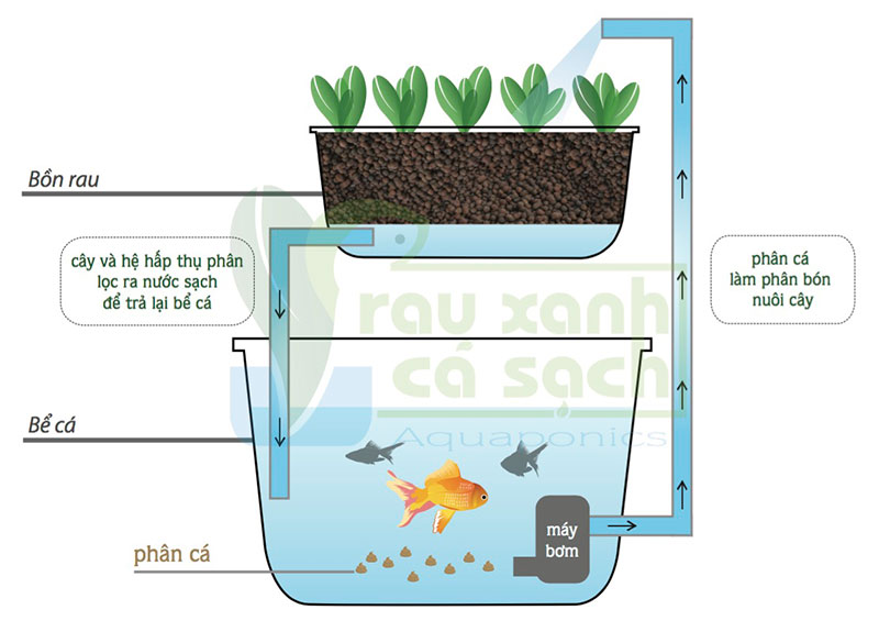 so-do-hoat-dong-aquaponics