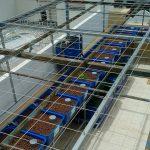 Hệ ĐÔI RXCS Aquaponics 14 khay rau 100L Vũng Tàu