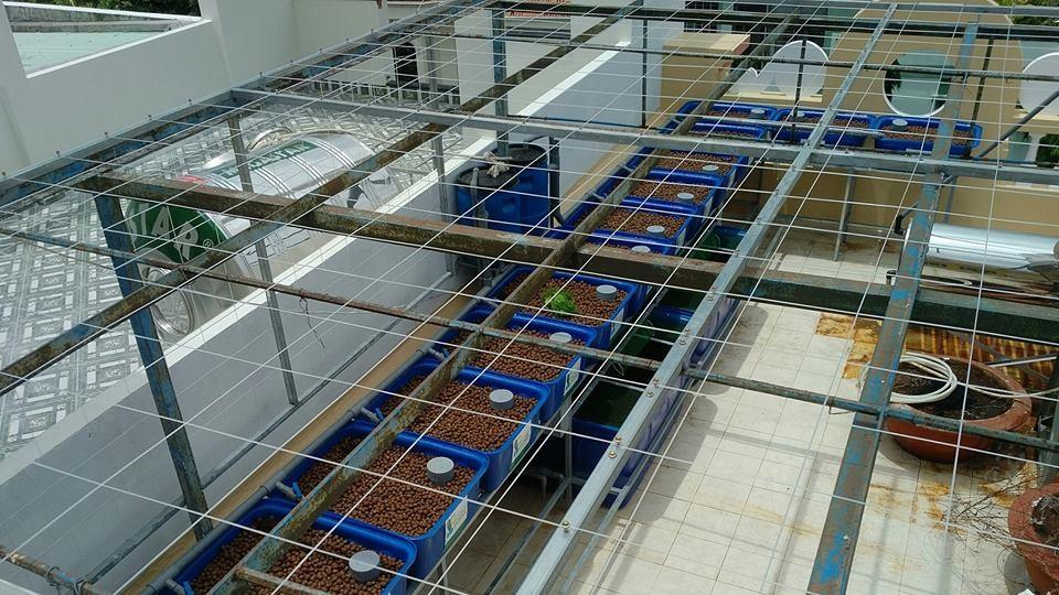 he-aquaponics-12-khay-rau-100-tai-ba-ria-vung-tau_1