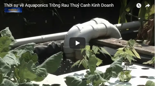 vtv1-aquaponics-tai-new-york-my