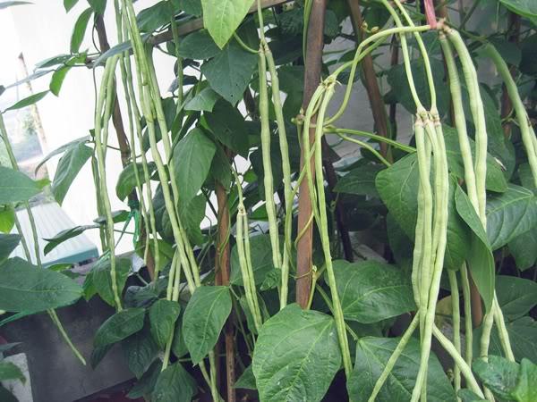 Các loại rau củ nên trồng vào tháng 4 dương lịch-5
