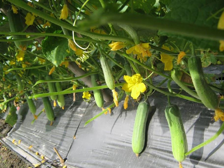 Các loại rau củ nên trồng vào tháng 4 dương lịch-7
