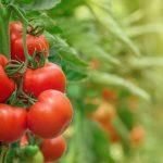 Cách trồng và chăm sóc các loại rau xanh nên trồng vào tháng 1