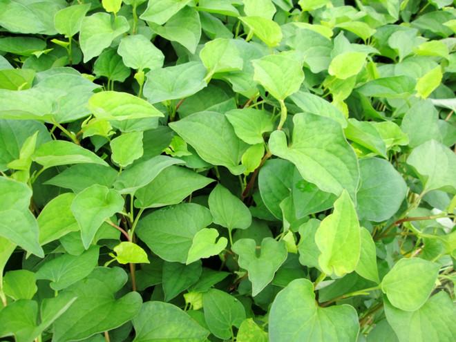 Những ngày nắng tháng 5 nên trồng những loại rau gì-10