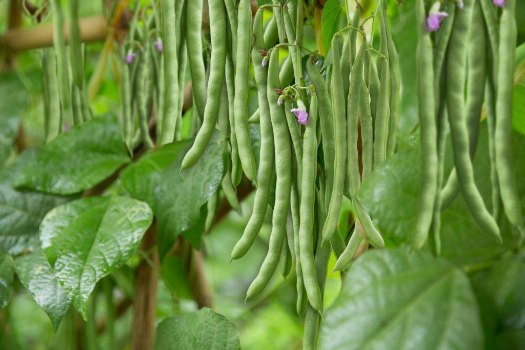 Những ngày nắng tháng 5 nên trồng những loại rau gì-3