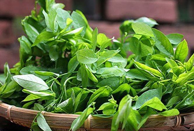 Những ngày nắng tháng 5 nên trồng những loại rau gì-7