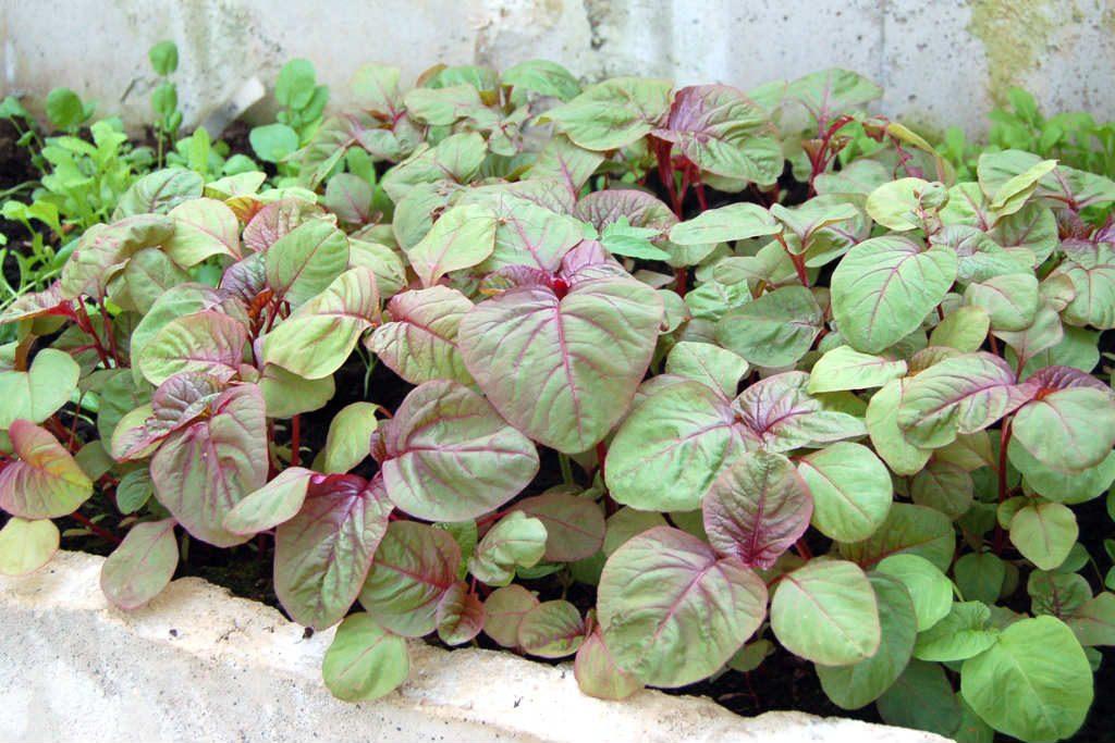 Tháng 2 nên trồng rau gì và chăm sóc như thế nào