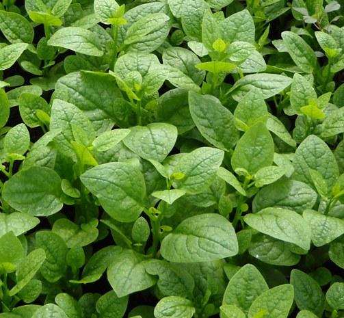Tháng 2 nên trồng rau gì và chăm sóc như thế nào-3