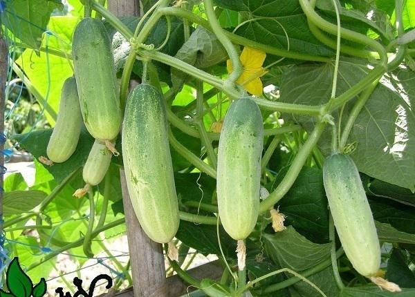 Tháng 2 nên trồng rau gì và chăm sóc như thế nào-8