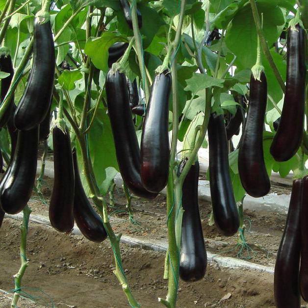 Tháng 3 chăm sóc và trồng rau gì để ăn hoài không hết-3