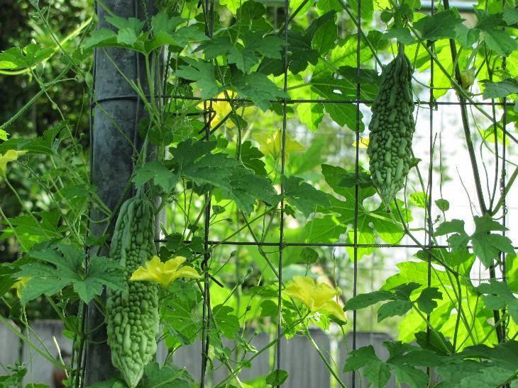 Tháng 3 chăm sóc và trồng rau gì để ăn hoài không hết-7