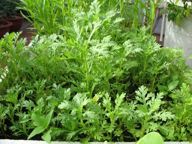 Tháng 3 chăm sóc và trồng rau gì để ăn hoài không hết1
