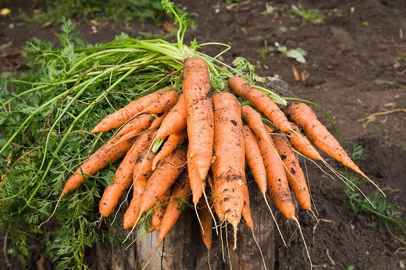 Danh sách các loại rau nên trồng vào tháng 9-4