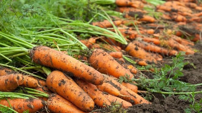 Danh sách các loại rau nên trồng vào tháng 9-5