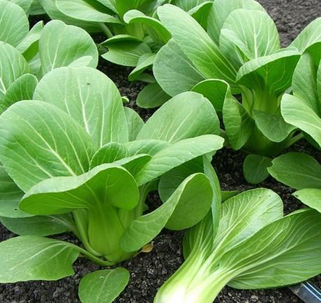 Danh sách các loại rau nên trồng vào tháng 9