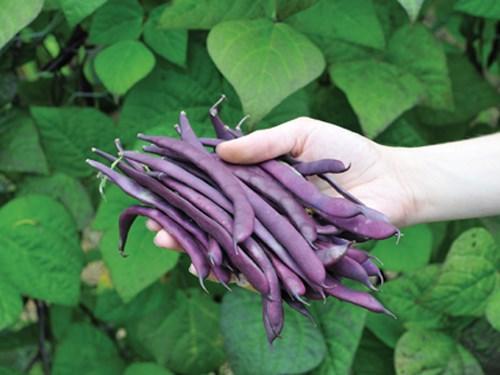 Những loại rau củ thích hợp cho thời tiết tháng 10-14