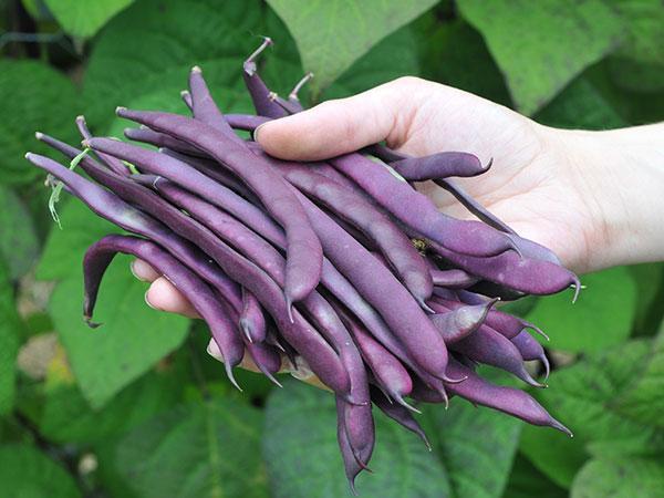 Những loại rau củ thích hợp cho thời tiết tháng 10-15