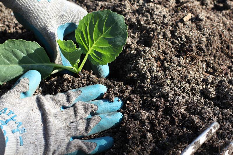 Những loại rau củ thích hợp cho thời tiết tháng 10-3