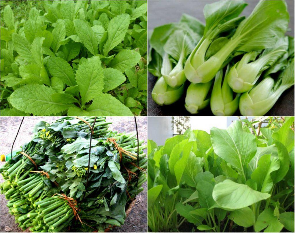 Những loại rau thích hợp trồng vào tháng 12-11