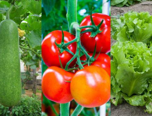 Những loại rau thích hợp trồng vào tháng 12