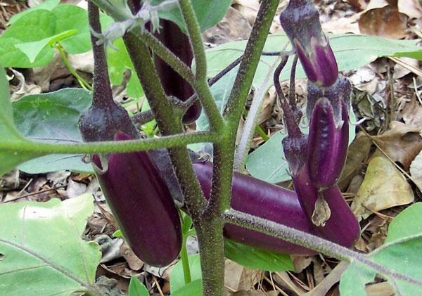 Những loại rau thích hợp trồng vào tháng 12-16