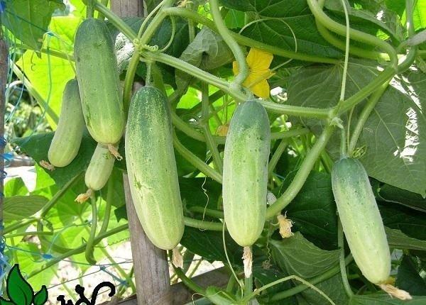 Những loại rau thích hợp trồng vào tháng 12-18