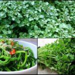 Tháng 11 nên trồng các loại rau họ cải