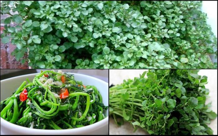 Tháng 11 nên trồng các loại rau họ cải-14