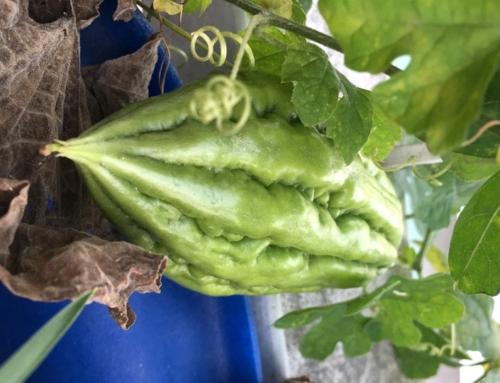 Tháng 6 – 7  – 8 nên trồng rau gì