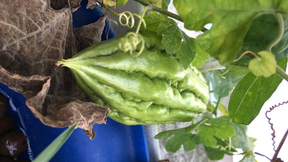 Tháng 6 - 7 - 8 nên trồng rau gì