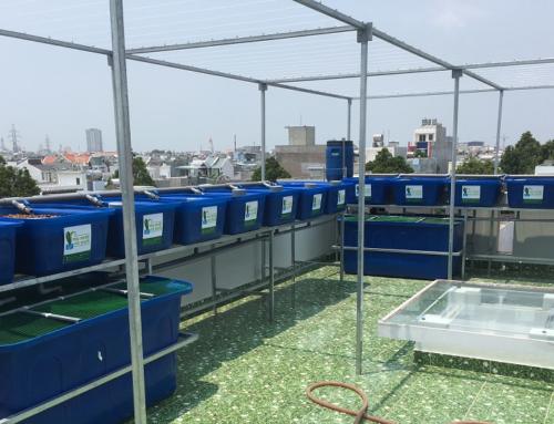 Hệ RXCS Aquaponics 14 khay rau 100L tại Vũng Tàu.