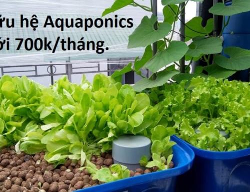 Trả góp – Sở hữu giàn RXCS Aquaponics chỉ từ 700K/tháng