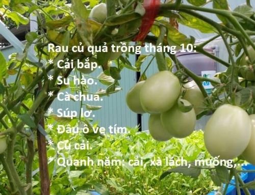 Những loại rau củ thích hợp cho thời tiết tháng 10