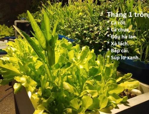 Cách trồng và chăm sóc các loại rau trồng vào tháng 1